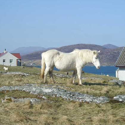 What to do on the Isle of South Uist